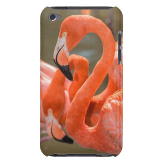 Pink Flamingos at Gatorland Case-Mate iPod Touch Case