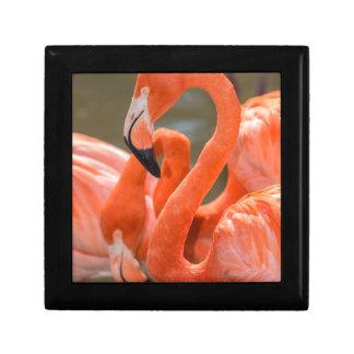 Pink Flamingos at Gatorland Gift Box