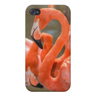 Pink Flamingos at Gatorland iPhone 4/4S Covers