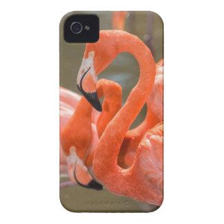 Pink Flamingos at Gatorland iPhone 4 Cover