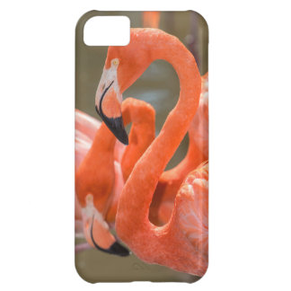 Pink Flamingos at Gatorland iPhone 5C Case