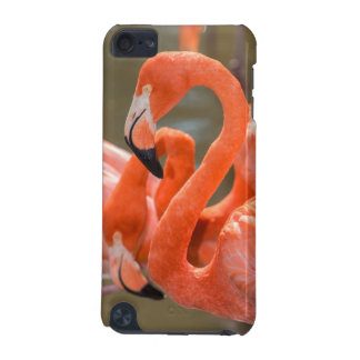 Pink Flamingos at Gatorland iPod Touch 5G Cases