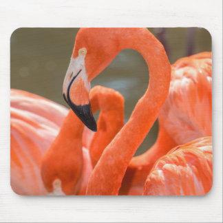 Pink Flamingos at Gatorland Mouse Mat