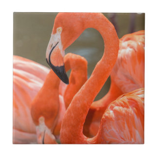 Pink Flamingos at Gatorland Tile