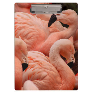 Pink flamingos clipboard