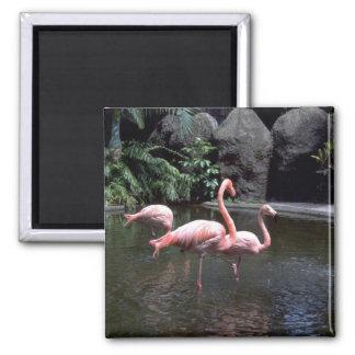 Pink flamingos in pond, St. Petersburg, Florida, U Refrigerator Magnet