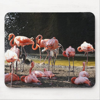 Pink Flamingos Mouse Mat