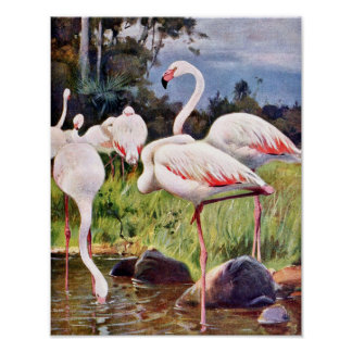 Pink Flamingos Vintage Illustration Poster