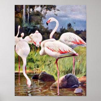 Pink Flamingos Vintage Illustration Poster