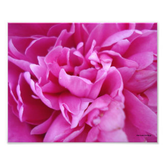 Pink Floral Art Photo
