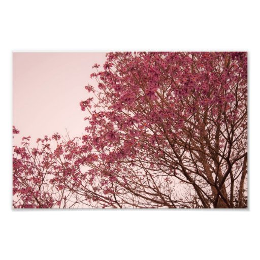 Pink Floral Branches Photo Art