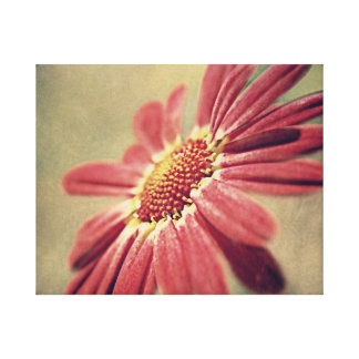 Pink Floral Daisy. Canvas Print