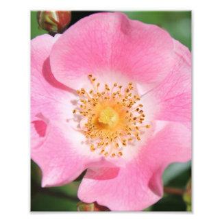 Pink Floral Print - Flower Art Photo