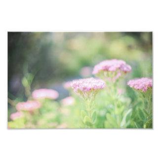 Pink Florals Photograph