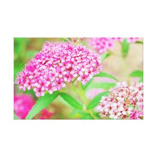 Pink Flower Burst Canvas