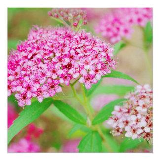 Pink Flower Burst Poster