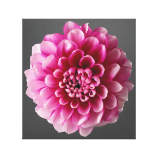 Pink Flower Canvas Prints