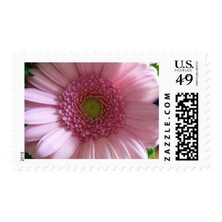Pink Flower Close Up Big Flower Postage Stamp