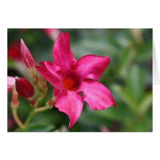 Pink flower floral note card
