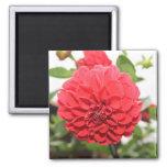 Pink Flower Magnets