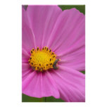 Pink Flower on a card or gift Stationery