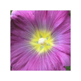 Pink Flower Photo Single Reproduction Stretched Canvas Print