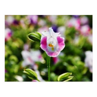 Pink flower -  postcards