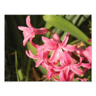 Pink Flower Print Photographic Print