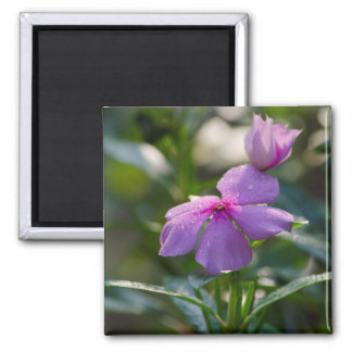 pink flower with dew drops magnet