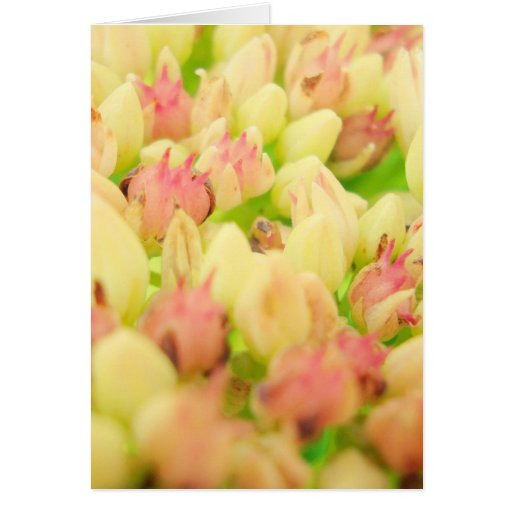 Pink Flowerbed Greeting Cards