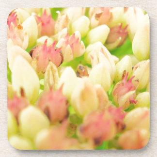 Pink Flowerbed Coasters