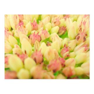 Pink Flowerbed Postcard
