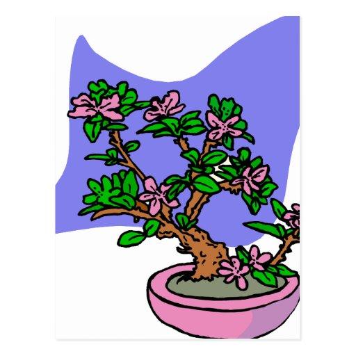 Pink Flowering Bonsai Pink Pot Blue Back Postcards
