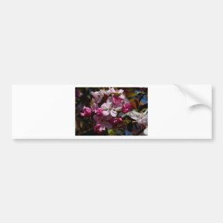 Pink Flowering Crabapple Blooms Bumper Stickers