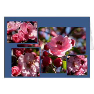 Pink Flowers Any Occasion Greeting Card