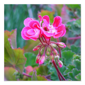 Pink flowers beautiful fun colorful garden photo 13 cm x 13 cm square invitation card