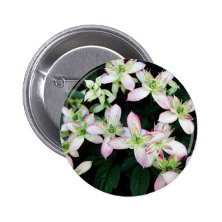 Pink flowers. Clematis. Pin