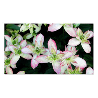 Pink flowers. Clematis. Business Card