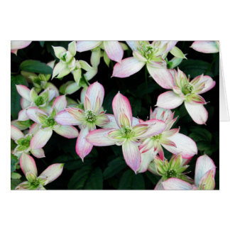 Pink flowers. Clematis. Stationery Note Card