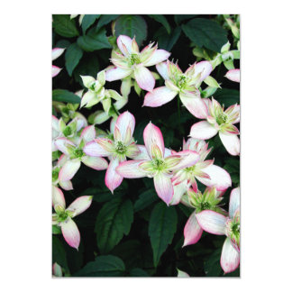 Pink flowers. Clematis. Custom Announcement