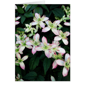 Pink flowers. Clematis. Note Card