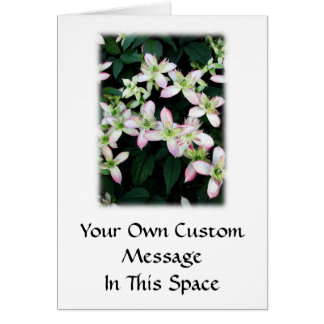 Pink flowers. Clematis. On White. Greeting Card