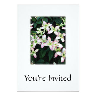 Pink flowers. Clematis. On White. Personalized Announcements