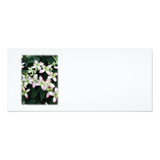 """Pink flowers. Clematis. On White. 4"""" X 9.25"""" Invitation Card"""
