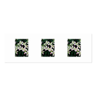 Pink flowers. Clematis. On White. Pack Of Skinny Business Cards