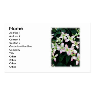 Pink flowers. Clematis. On White. Pack Of Standard Business Cards