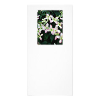 Pink flowers. Clematis. On White. Customized Photo Card