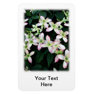 Pink flowers. Clematis. On White. Rectangular Magnet
