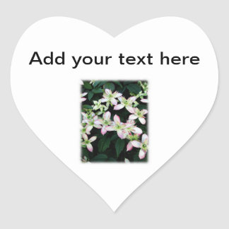 Pink flowers. Clematis. On White. Stickers