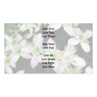 Pink flowers. Clematis. Pack Of Standard Business Cards